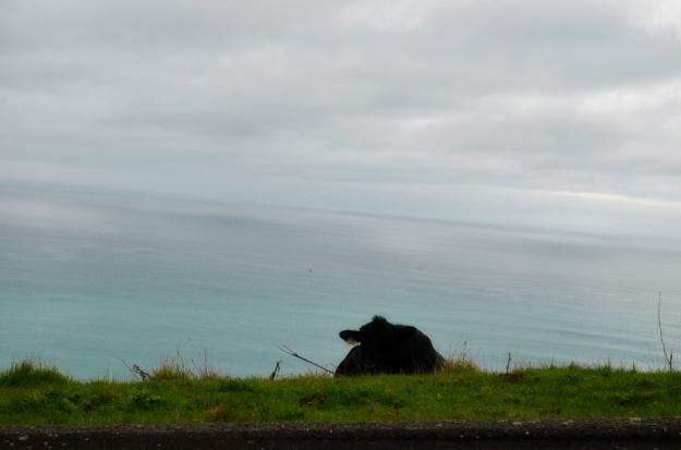 Cows on the coast