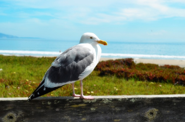 Drake Beach