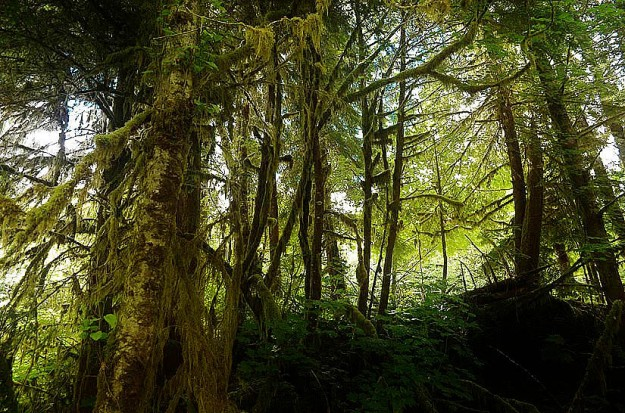 The Mossy forests of Olympic National Park
