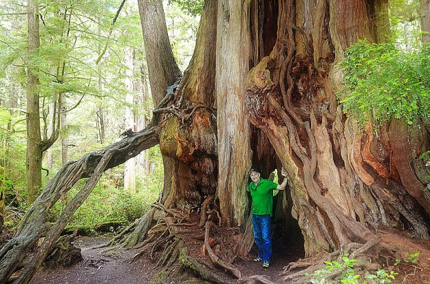 Trees in Olympic National Park