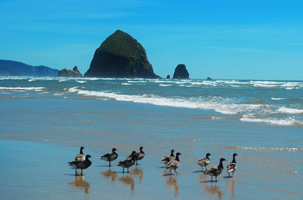 Haystack Rock -- Taken in 2013