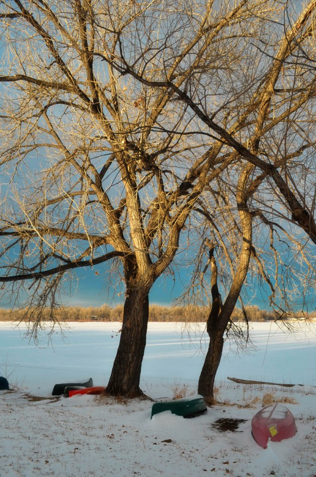 Tree along the shore of a frozen lake