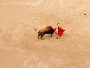 Traditional Bull Fight