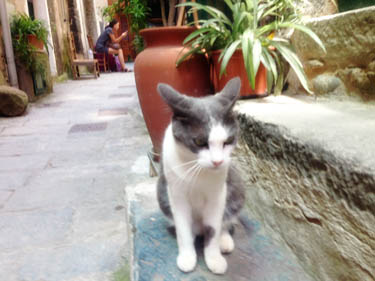 Cat in Vernazza