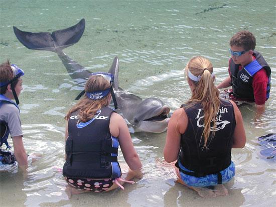 swimwithdolphins-2