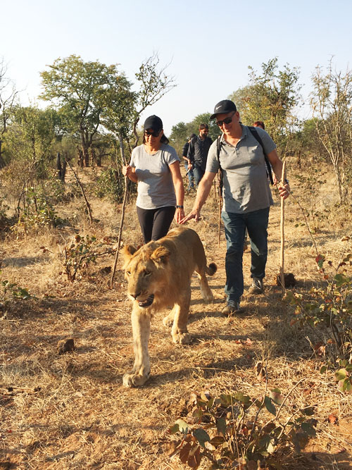 Lion Encounter Walk