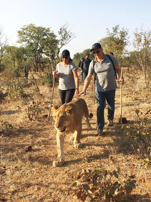 Lion Encounter Walk