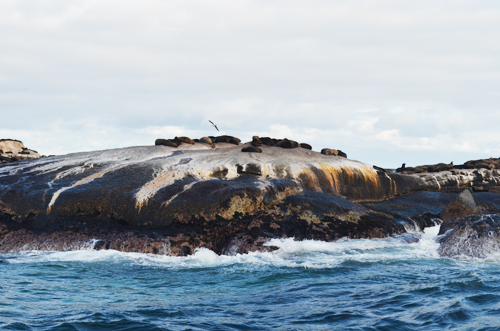 Seal Island Cape Town SA