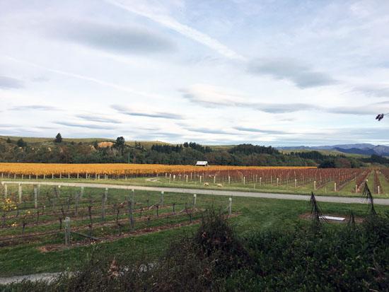 Marlborough Wineries